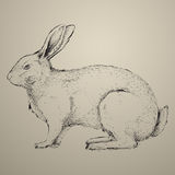 Hand getrokken konijn Royalty-vrije Stock Afbeeldingen