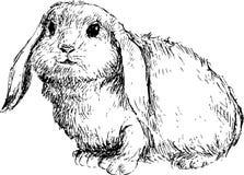 Hand getrokken leuk konijn Royalty-vrije Stock Afbeeldingen