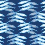 Hand getrokken mariene naadloze patroon blauwe waterverf een groep Atlantische makreelvissen op donkerblauwe achtergrond vector illustratie
