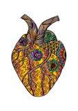 Hand getrokken menselijk hart Royalty-vrije Illustratie