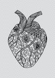 Hand getrokken menselijk hart Vector Illustratie
