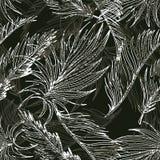 Hand Getrokken Naadloze Achtergrond met Palmbladen en Tropisch FL Stock Foto's