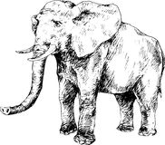 Hand getrokken olifant Royalty-vrije Stock Afbeelding