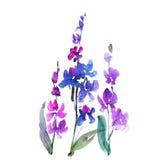 Hand getrokken orchideebloem Stock Afbeelding