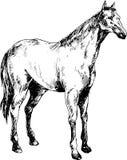 Hand getrokken paard Stock Fotografie