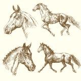 Hand getrokken paarden Stock Afbeeldingen