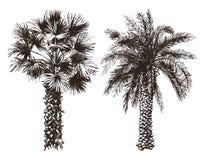 Hand getrokken palmen royalty-vrije illustratie