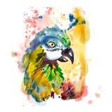 Hand getrokken papegaaihoofd Royalty-vrije Stock Foto's