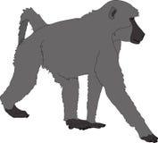 Hand getrokken portret van een wilde baviaan royalty-vrije illustratie