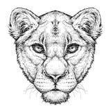 Hand getrokken portret van Leeuwin Vectordieillustratie op wit wordt geïsoleerd vector illustratie