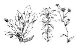 Hand Getrokken reeks bloemen en kruiden uitstekende bloemenelementen royalty-vrije illustratie
