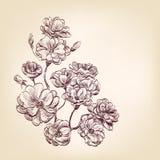 Hand getrokken rozen Royalty-vrije Stock Foto