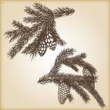 Hand getrokken rustieke uitstekende ontwerp vectorelementen Bosinzameling van naaldtakken en denneappels  Royalty-vrije Stock Afbeeldingen