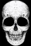 Hand getrokken schedel Stock Fotografie