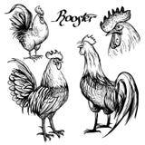 Hand getrokken schets van hanen Stock Afbeeldingen