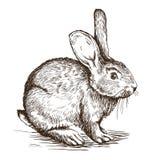 Hand getrokken schets van konijn Stock Fotografie