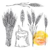 Hand getrokken schetsillustratie van tarwe Het concept van het landbouwthema, graangewassenproducten, bakkerijpatroon, gezond voe stock illustratie