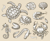Hand getrokken schetsreeks van zeevruchten, overzeese dieren Vector illustratie royalty-vrije illustratie