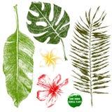 Hand getrokken tropische bladeren en bloemen Stock Afbeeldingen