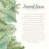 Hand getrokken tropische palmbladenkaart Stock Fotografie