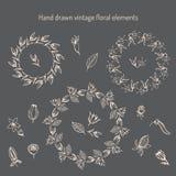 Hand getrokken uitstekende bloemenelementen Royalty-vrije Stock Fotografie