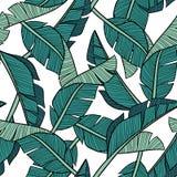 Hand getrokken vectorbanaanbladeren op witte achtergrond vector illustratie