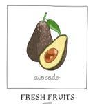 Hand getrokken vectorillustratie van geïsoleerde avocado Heldere kleur Stock Fotografie