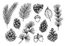 Hand getrokken vectorillustraties - Forest Autumn-inzameling Spru royalty-vrije illustratie