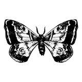Hand getrokken vlinder Stock Foto
