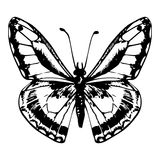 Hand getrokken vlinder Royalty-vrije Stock Foto