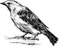 Hand getrokken vogel Stock Afbeeldingen