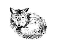 Hand getrokken vos royalty-vrije illustratie
