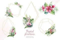 Hand getrokken waterverf tropische gouden florariums met flamingo De exotische illustraties van het florariumkader voor tekst, wi vector illustratie