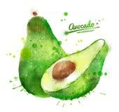 Hand getrokken waterverfillustratie van avocado stock illustratie