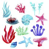 Hand getrokken waterverfreeks onderwater natuurlijke die elementenkoralen en zeesterren, waterplanten, ammoniet op witte backgrou vector illustratie