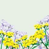 Hand getrokken wilde bloemen - gele tansy Royalty-vrije Stock Foto's