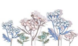 Hand getrokken wilde tansy bloem Royalty-vrije Stock Foto's