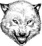Hand getrokken wolfshoofd Royalty-vrije Stock Afbeelding