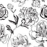Hand getrokken zwart-wit inkt Aziatische pioenen stock illustratie