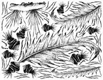 Hand gezeichnet vom Seegemüse oder -meerespflanze auf weißem Hintergrund Lizenzfreie Stockbilder