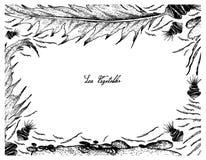 Hand gezeichnet von Aonori-Meerespflanze auf weißem Hintergrund Lizenzfreies Stockbild