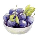 Hand gezeichnete Aquarellillustration der Fruchtpflaume Stockfotos