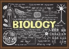 Hand gezeichnete Biologie auf Tafel Stockfotografie