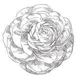 Hand gezeichnete Blume Lizenzfreie Stockfotos