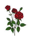 Hand gezeichnete Blume, bunte Rose Stockbilder