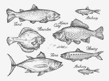 Hand gezeichnete Fische Skizzieren Sie Forelle, Karpfen, Thunfisch, Hering, Scholle, Sardelle Auch im corel abgehobenen Betrag lizenzfreie abbildung