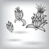 Hand gezeichnete Florenelemente für Design Lizenzfreies Stockbild