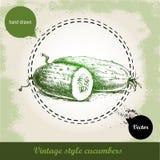 Hand gezeichnete frische Gurken Weinleseskizzenart organisches eco Gemüse Lizenzfreies Stockbild