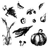 Hand gezeichnete Gekritzelernteelemente Mais, Kürbis, Traube, Apfel, Blatt, Pilz, Birne, Weizen Schwarze Bilder Stockfotografie