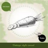 Hand gezeichnete geschnittene Karotte Organisches eco Gemüselebensmittelhintergrund Lizenzfreie Stockfotografie